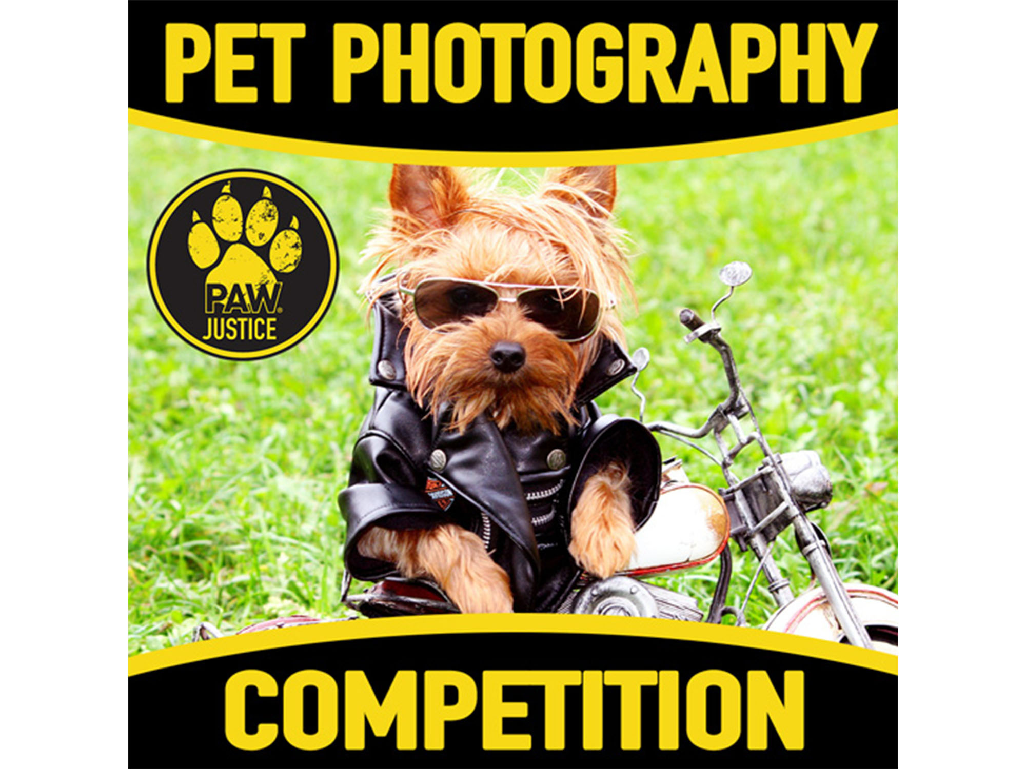 Shacky Pet Photography Competition 2018